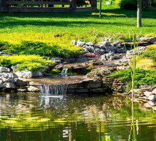 aranżacja oczka wodnego w ogrodzie