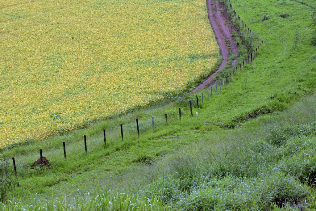droga polna między polami uprawnymi