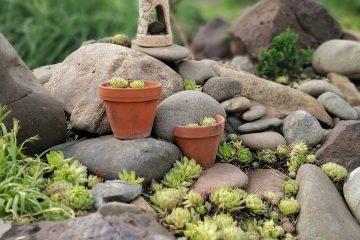 ogródek skalny aranżacja