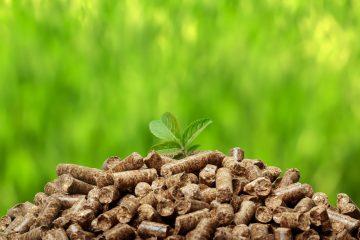 ekologiczny ekogoszek