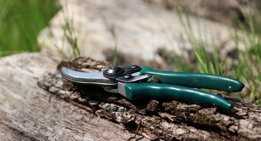 nożyce do ogrodu