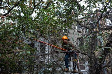 mężczyzna przycinający gałęzie