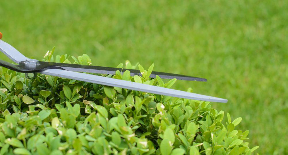 nożyce do przycinania